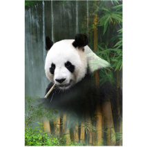Giant Panda Waterfall Call of the Wild Hoffman Quilt Panel 43 x 30 Inches Digital Print Sewing Buddies Australia